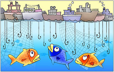 Race to fish